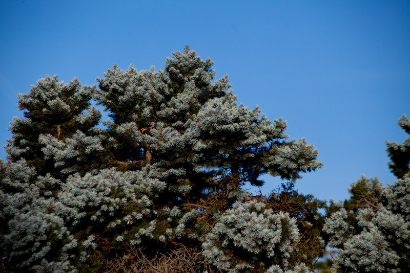 More coniferous.