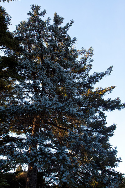 The confierous display.  I liked this pine tree.  It looked like it had snow on it but it was just multicolored.