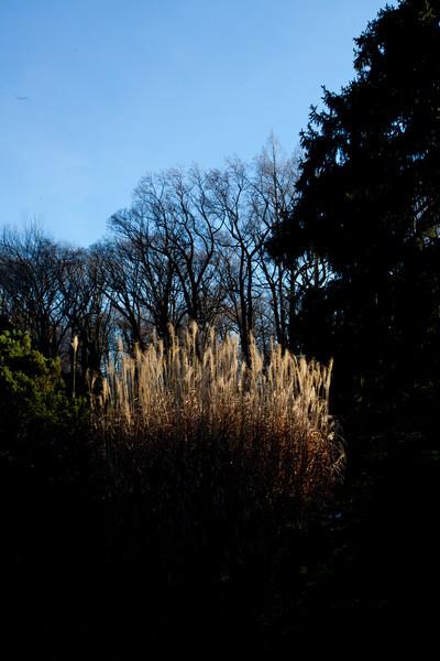 Part of the arboretum