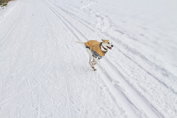 Winter Hike with Heidi