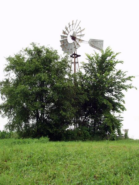windmill before I dug out those big elm trees.