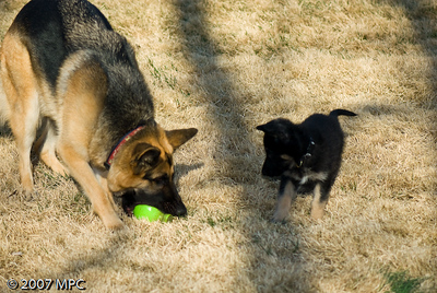 Wolfgangs not quick enough - Sasha takes the cuz back!