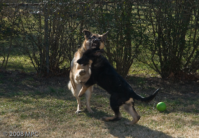 Wolfgang's_BAD_Day!_(4_of_15)