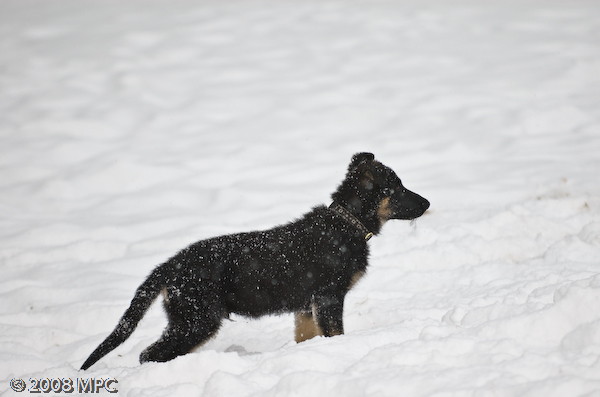 stalking his sister in the snow