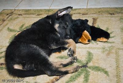 Sleeping on his bear