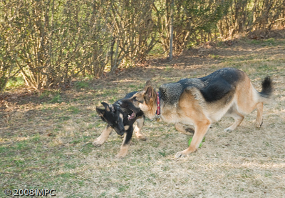 Wolfgang's_BAD_Day!_(15_of_15)