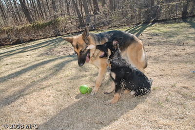 Wolfgang's_BAD_Day!_(12_of_15)