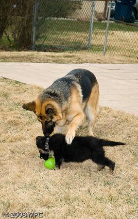 Sasha gently reminding Wolfgang thats HER cuz!
