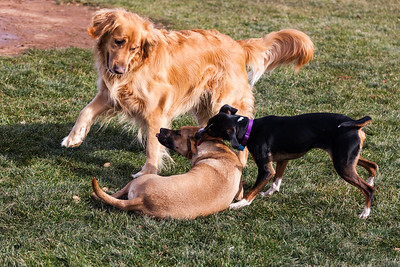 Wollcott Popup Dog Park 1-14-17