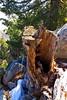 tree stump tram_002