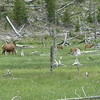 Elk!!  One is nursing.