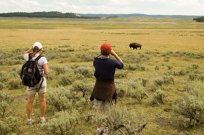Kevin and Steph checking out a Bison that we hiked by in Hayden Valley