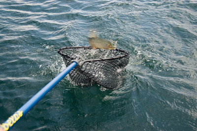 Landing Sara's fish with the net