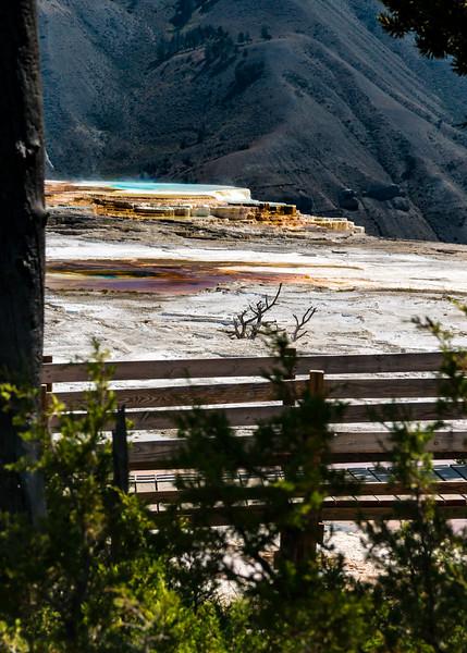 yellowstone jackson hole-5519.jpg