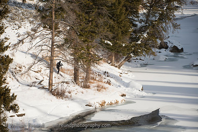 Our resident Canon Pro hiking down to try to get a closer shot of the coyote crossing over the Lamar River.