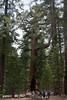 Yosemite-2010-June-4559