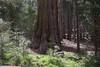 Yosemite-2010-June-4557