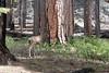 Yosemite-2010-June-4574