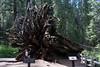Yosemite-2010-June-4545