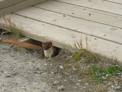 Yukon Holiday 2006
