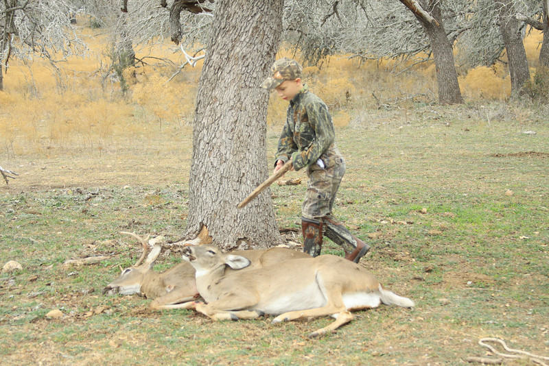 deer 074