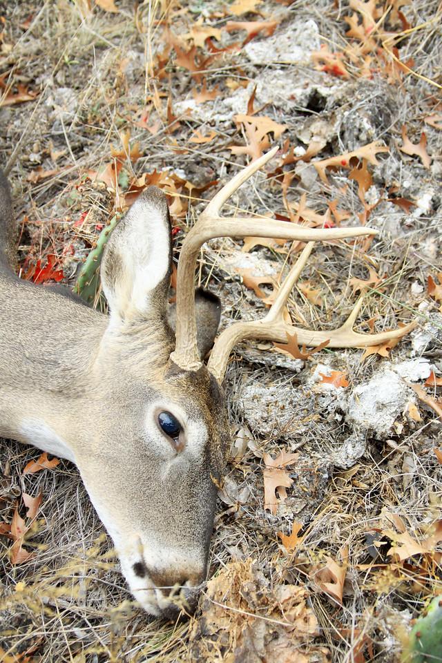 deer 018 1