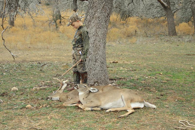 deer 075
