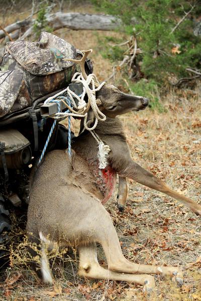 deer 041 1