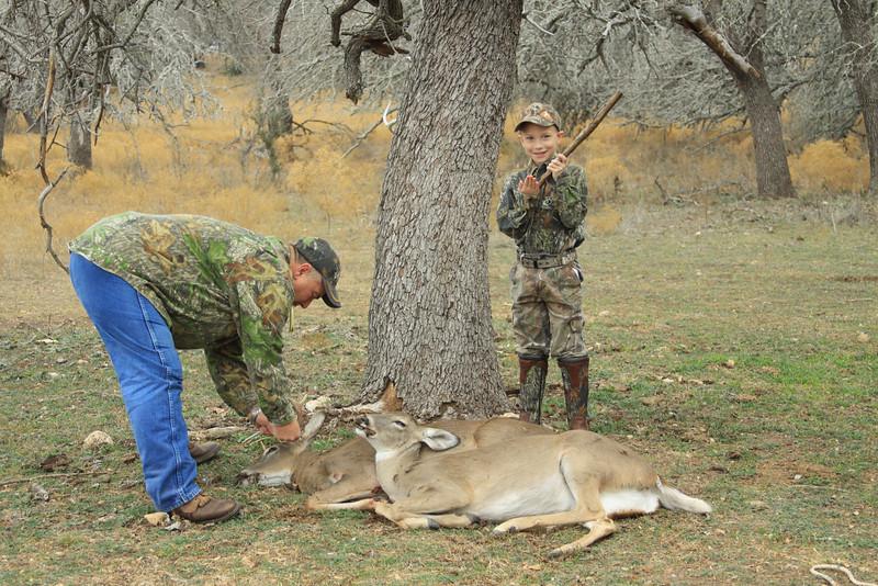 deer 077