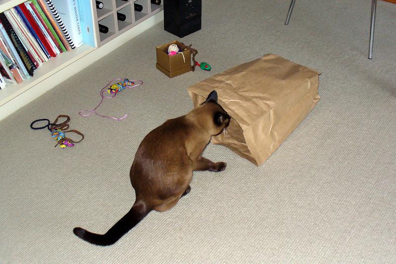 Investigating a paper bag