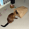 Investigating a paper bag