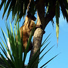 Up the cabbage tree in the back yard (at a million miles an hour!)
