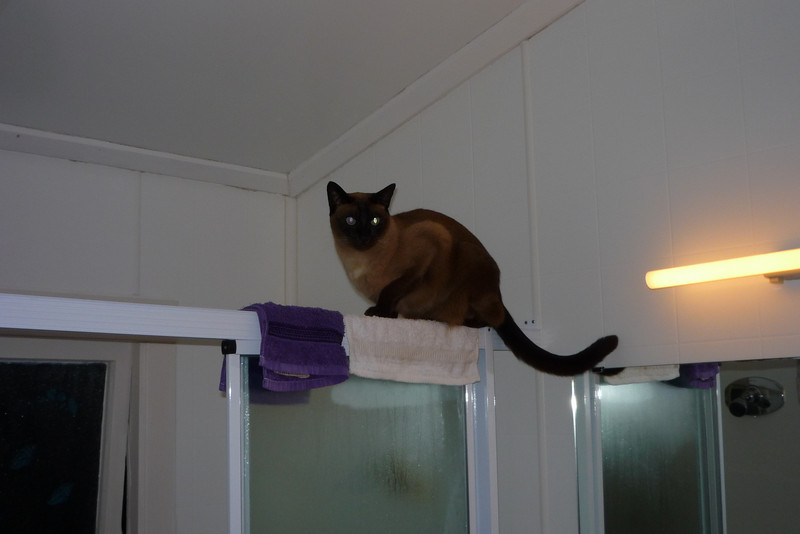 On top of the shower screen!
