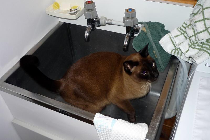 In the washtub