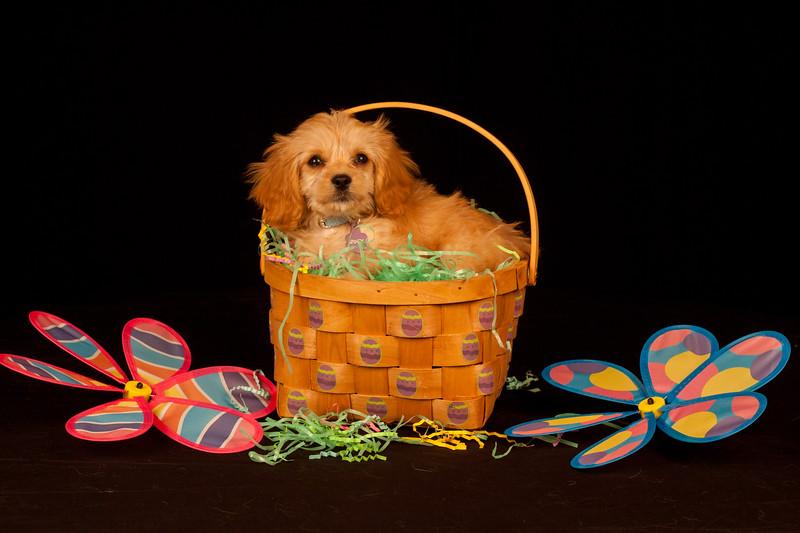 IMAGE: https://photos.smugmug.com/Family/Zoey-Puppy/i-Js9rnLH/0/4a925a60/L/IMG_8242-L.jpg