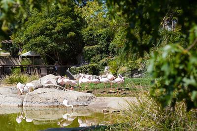Zoo 2016