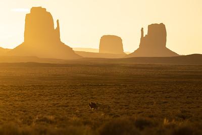 Desert Drifters