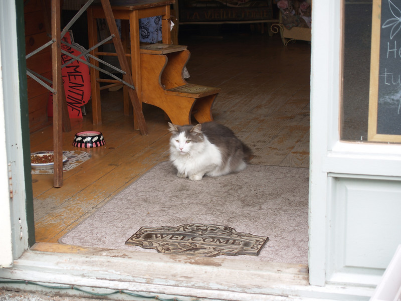 Welcome!!<br /> Grumpy old cat  at a store in Knowlton.