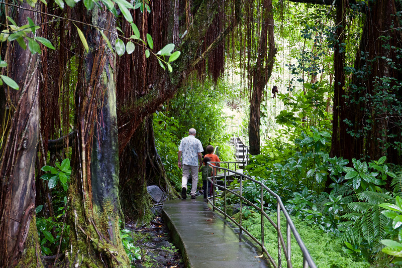 Steve walks with Taio and Baye beneath a banyan tree near Akaka Falls.