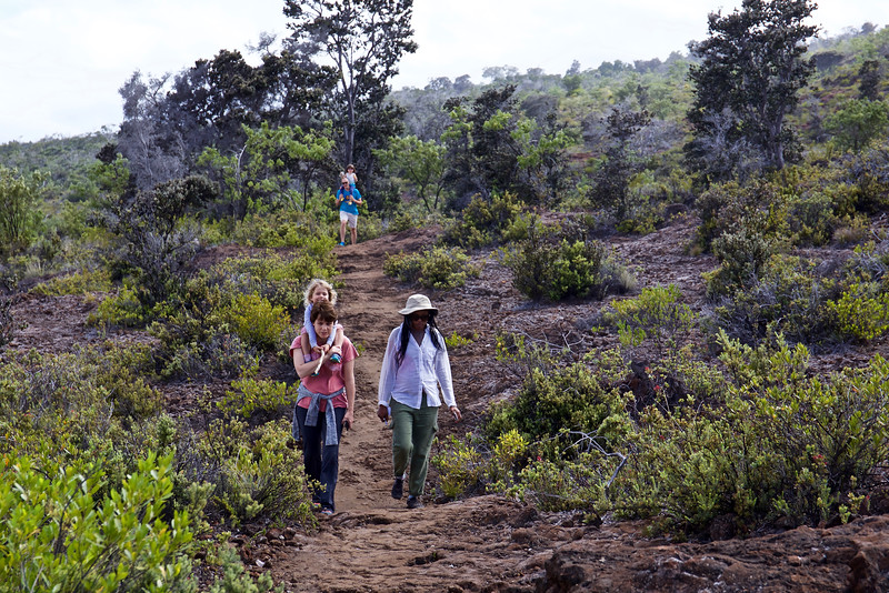 "We hiked across  lava by the Mauna Loa Road in the Park, looking for  the ""Kau"", Silver Sword (Argyroxiphium kauense),  found only on this mountain."