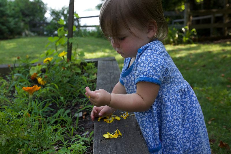 Makeda examines marigolds in the garden.