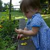 Makeda examines marigolds in the garden.