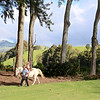 Clio on Eddie Lewis's horse, Pikake, in the crater at Puu Pueo.