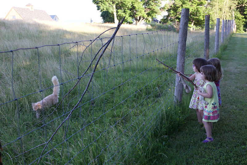 The cat is fortunate there is a fence between it and this posse of three-year-olds.