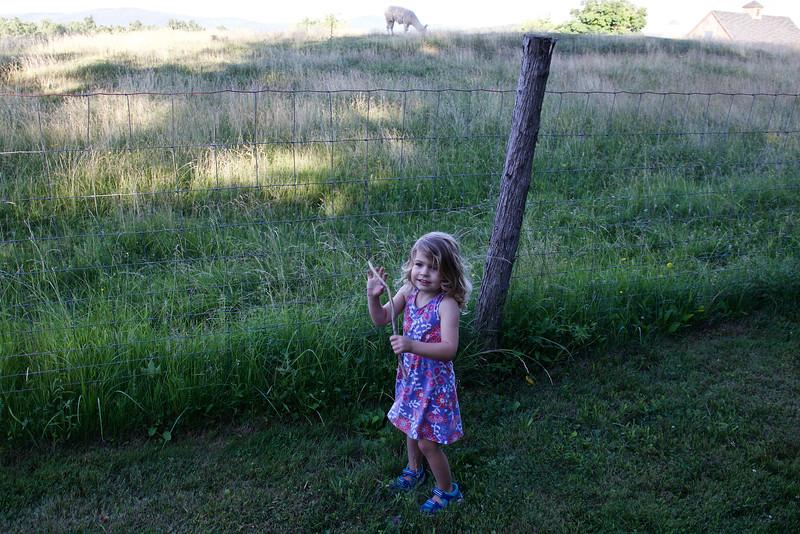 Clio and llama.
