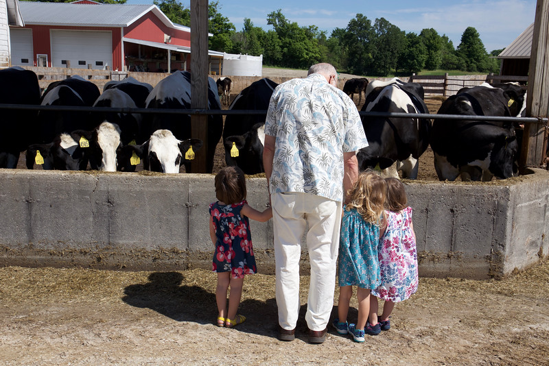 Visiting the cows.