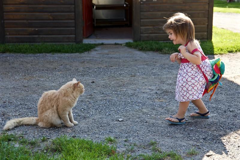 Nice cat?