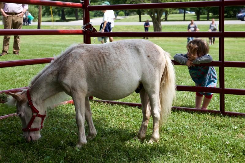 Makeda studies the miniature horse.