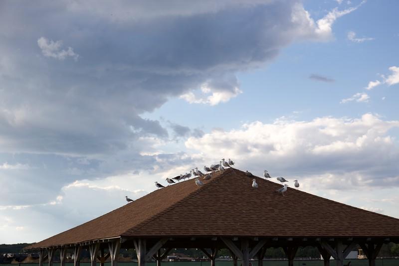 Seagulls overseeing Hammonassett Beach.
