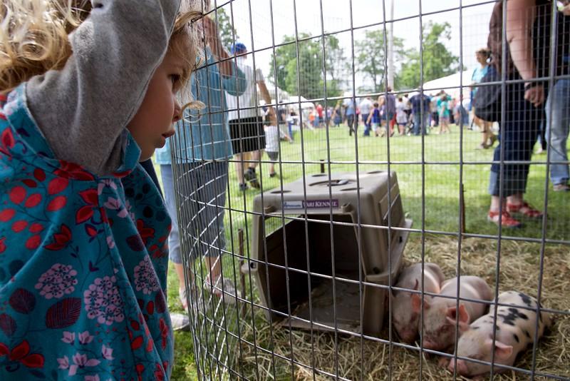 Clio contemplates the piggies